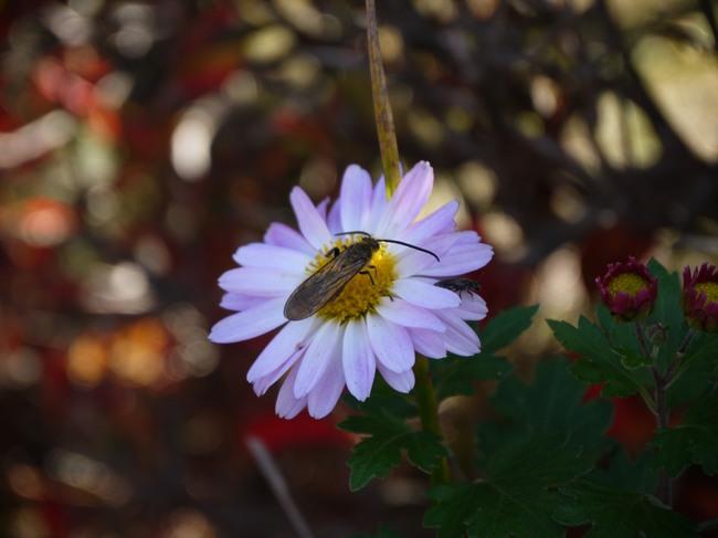 1041_河口湖の花.JPG